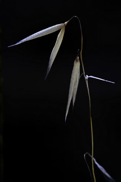 weeds-01.jpg