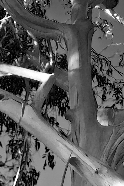 tree-04.jpg
