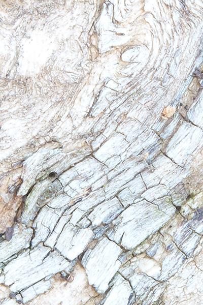 tree-closeup-03.jpg