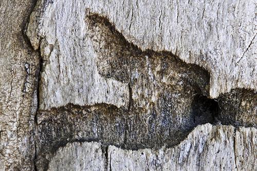 tree-closeup-04.jpg