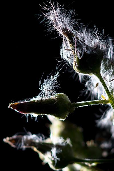 weeds-04.jpg