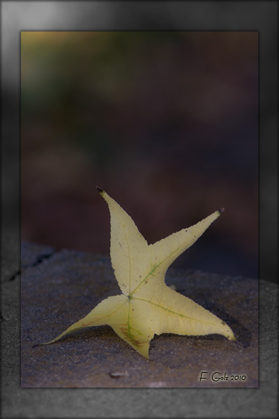 fall-03.jpg