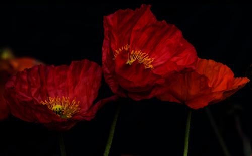 flower-08a.jpg