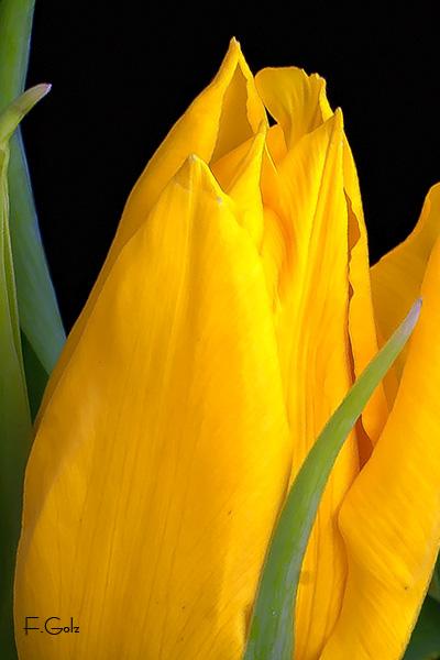 flower-10b.jpg