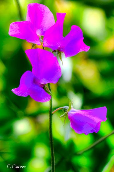 flower-11.jpg