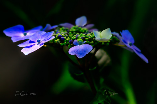 flower-15s.jpg