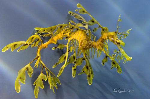 underwater-04.jpg