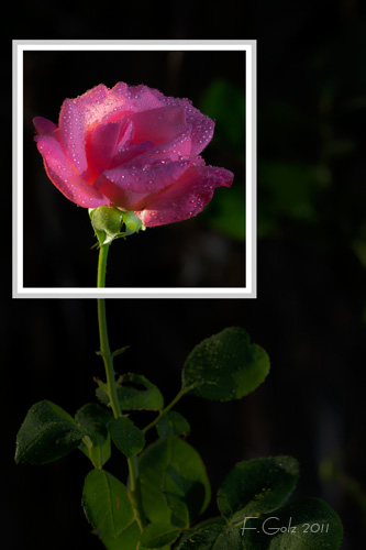composition-frame-01.jpg