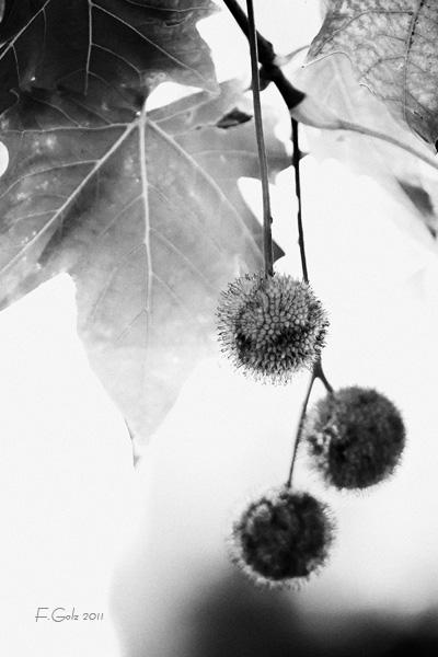 fall-bw-01.jpg