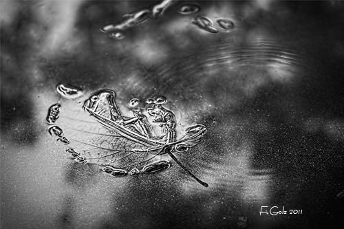 fall-bw-03.jpg