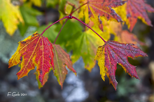 fall-colors-01.jpg