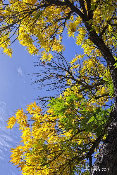 fall-colors-02.jpg