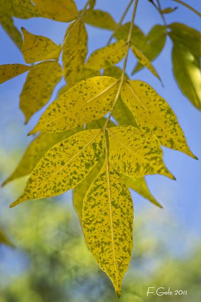 fall-colors-03.jpg