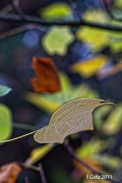 fall-colors-04.jpg