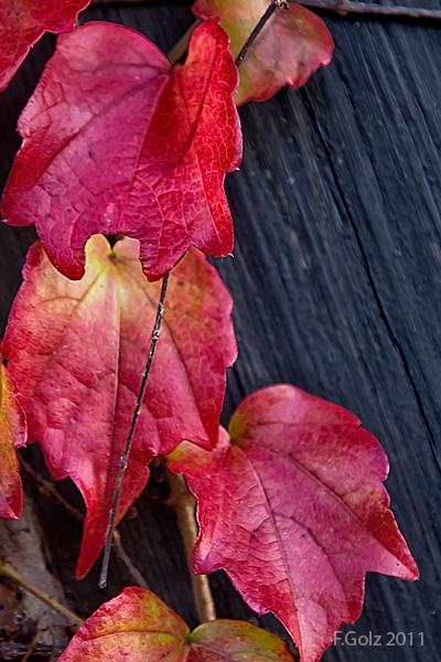 fall-colors-05.jpg