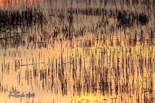 water-14.jpg