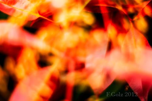 creative-blur-05.jpg