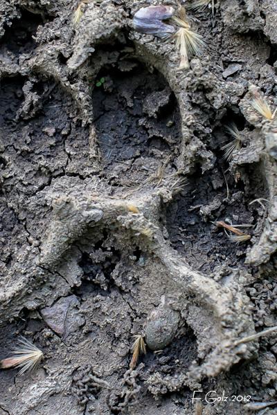 mud-05.jpg