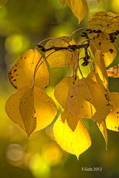 fall-13.jpg