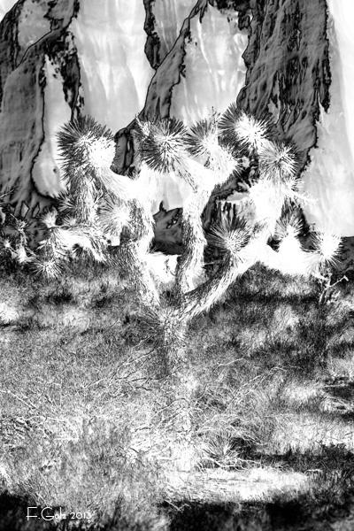solarisation-07.jpg