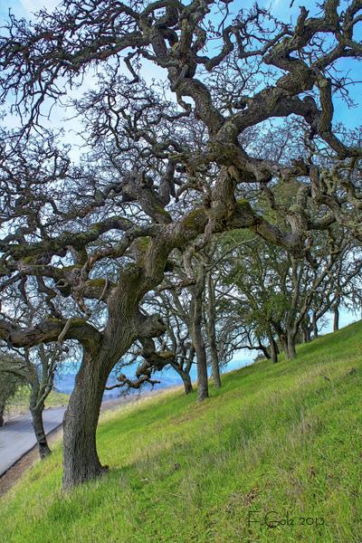 oak-tree-02.jpg