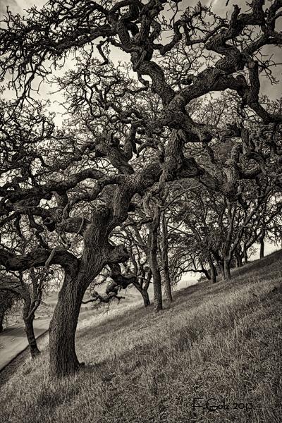 oak-tree-02b.jpg