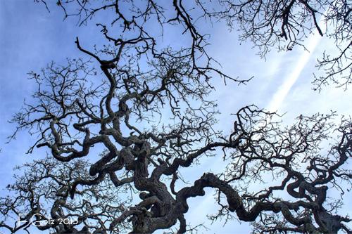 oak-tree-03.jpg