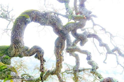 oak-tree-04.jpg