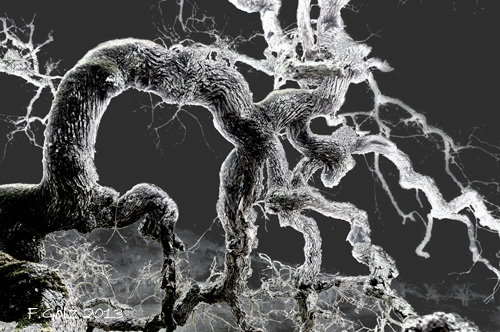 oak-tree-04b.jpg