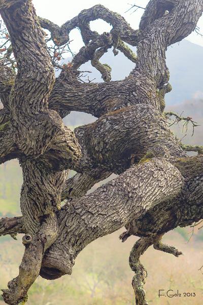 oak-tree-05.jpg