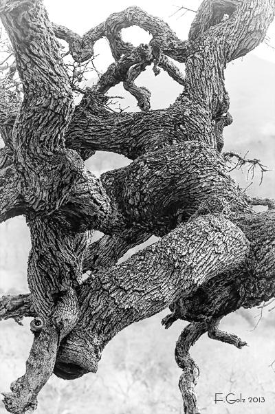 oak-tree-05b.jpg