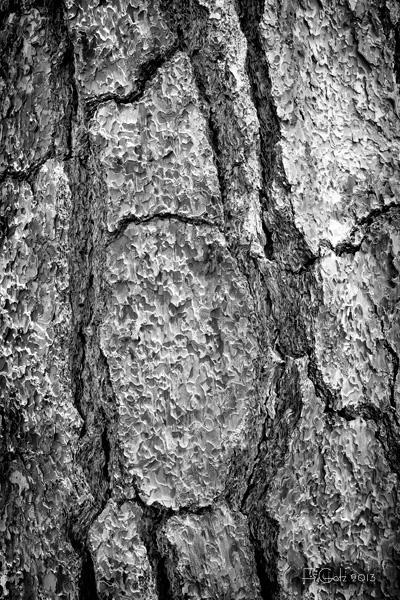 bark 01