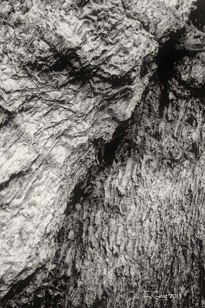 bark 05