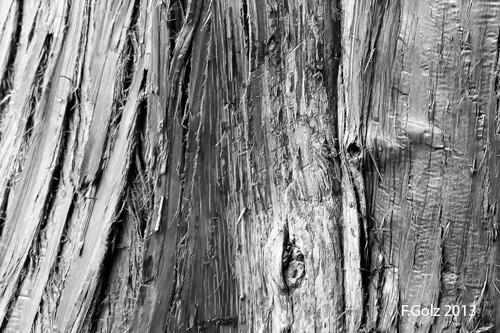 bark 06