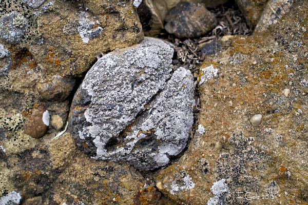 Rocks 13