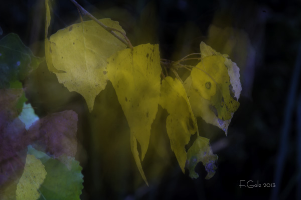 Dreamy Leaves 01