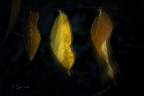 Dreamy Leaves 02
