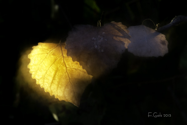 Dreamy Leaves 03