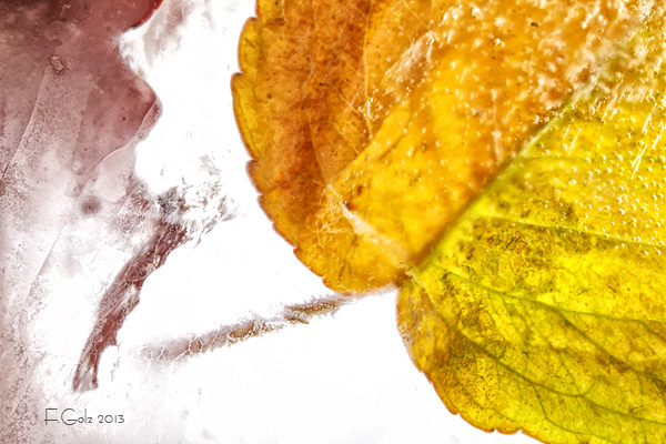 Frozen Leaves 05