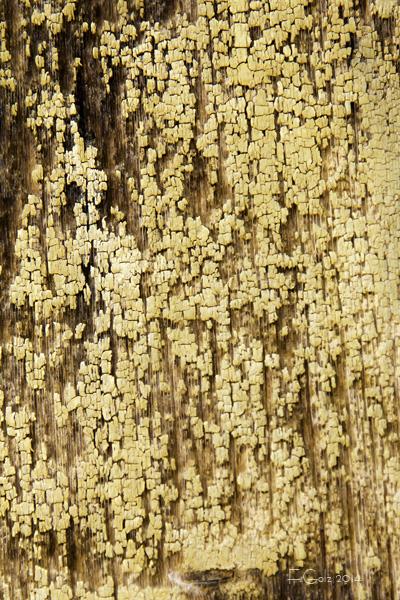 wood pattern 02