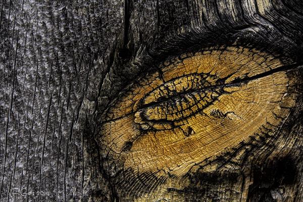 wood pattern 04