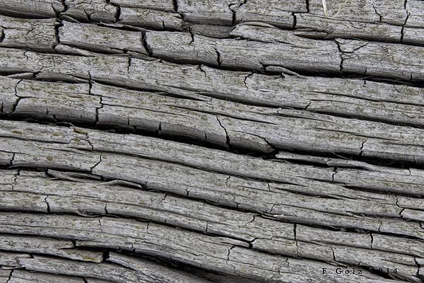wood pattern 05