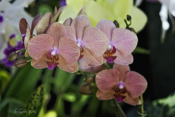 Orchids 01