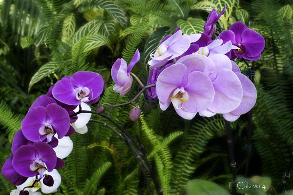 Orchids 02