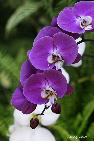 Orchids 04