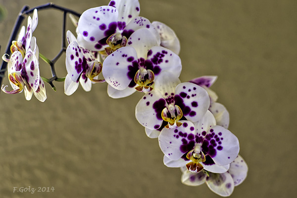 Orchids 06