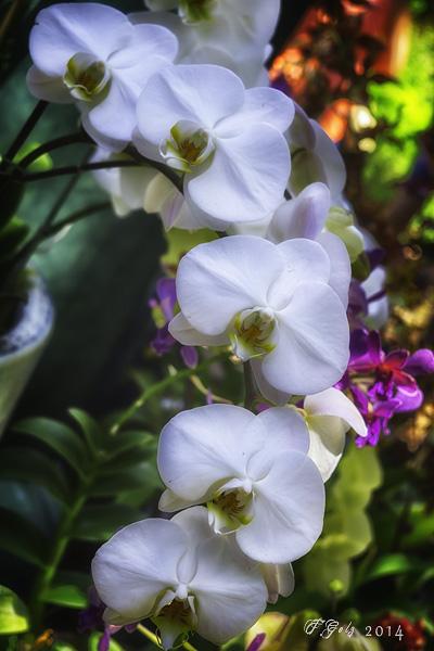 Orchids 09