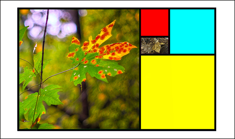 Golden mean template Fall colors 02