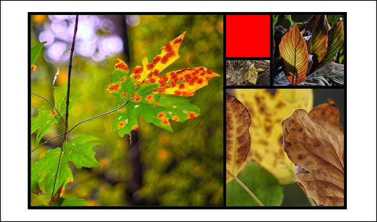 Golden mean template Fall colors 04