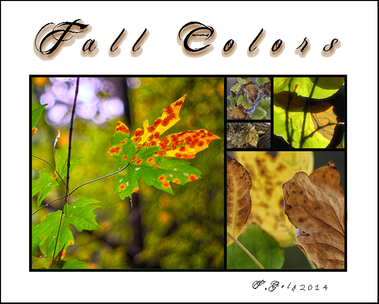 Golden mean template Fall colors 05b